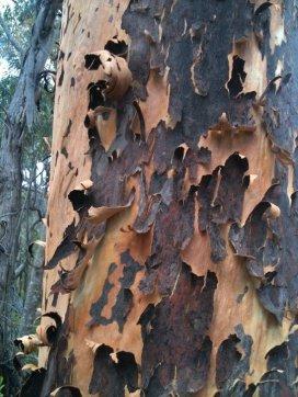 Bark falling